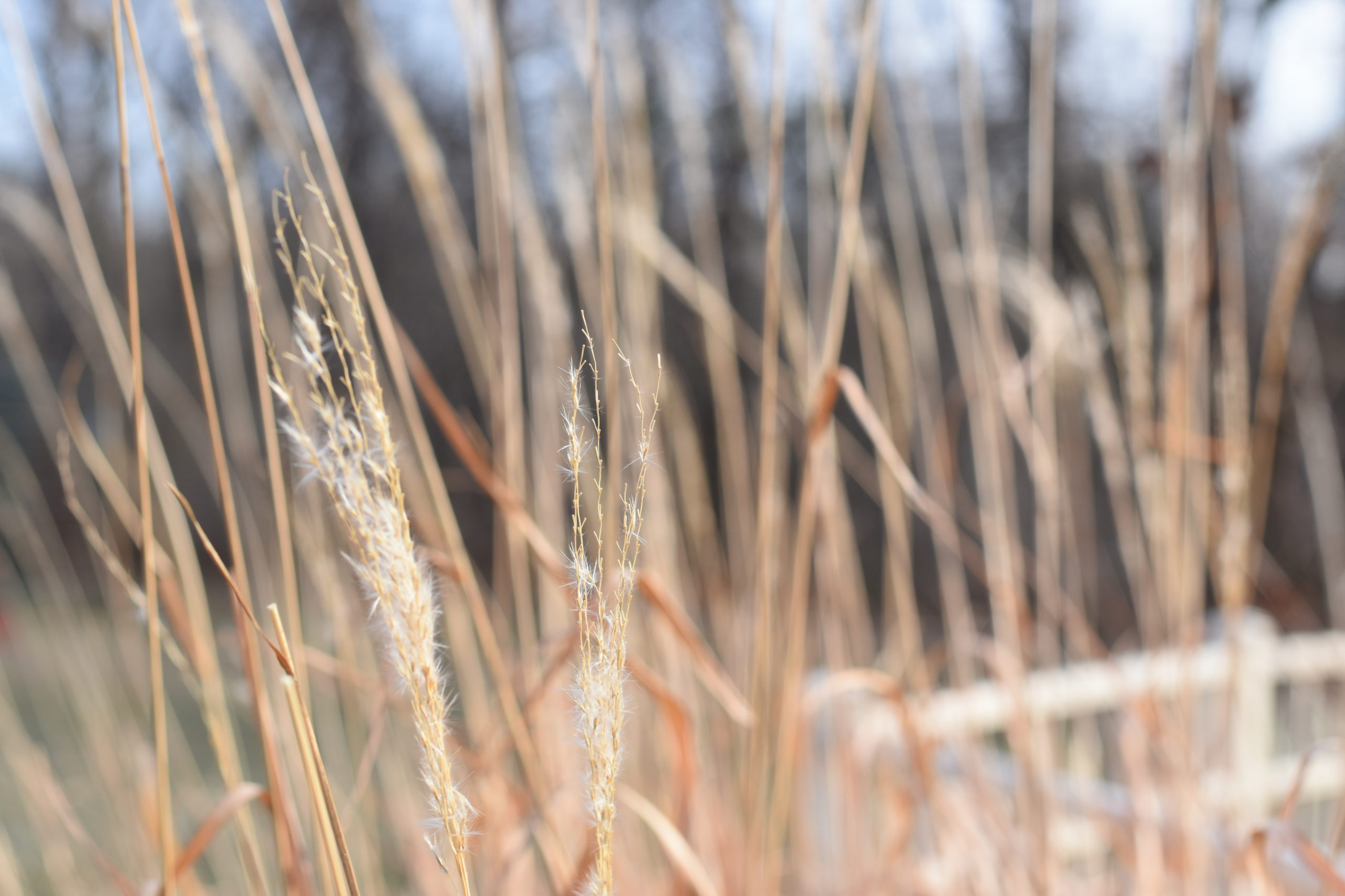 Grass wintered over