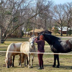 Horses in Hastings