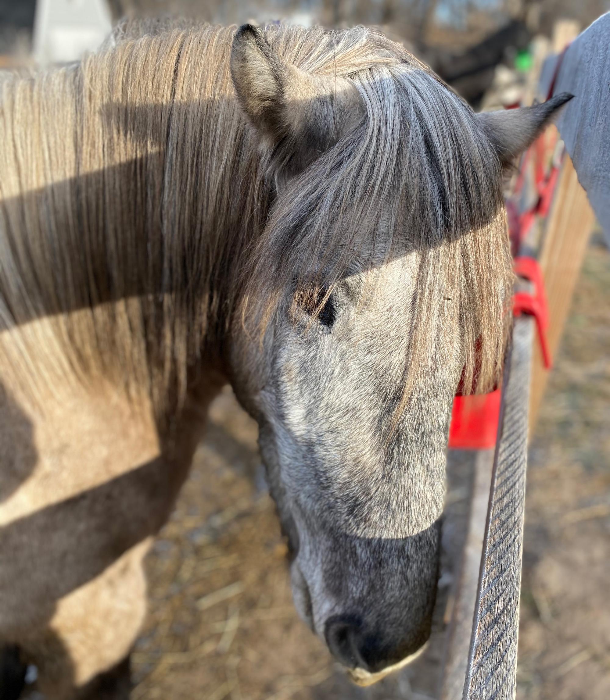 Duncan, a horse on Innisfree Farm.