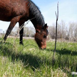 Horse in pasture in Waterloo, IA